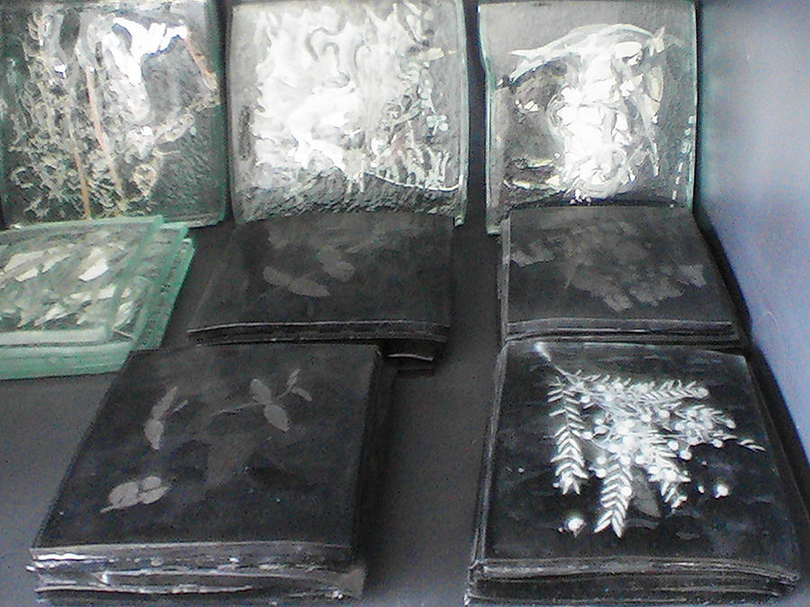 Black And Clear Tiles Rainforest Remnants  Glass Art