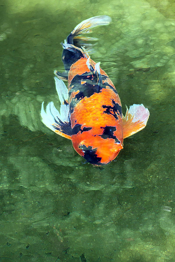 black and orange koi fish photograph by j michael elliott