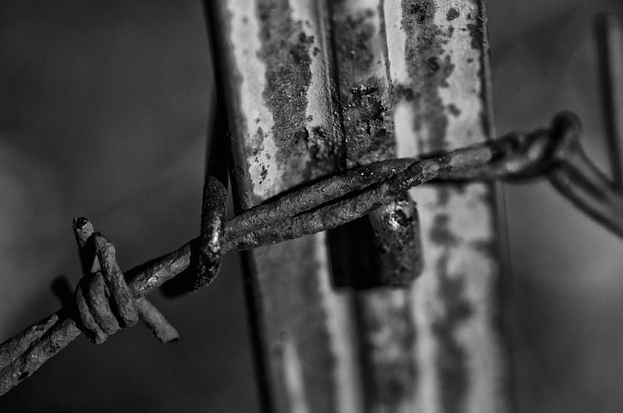 Black and white barbed wire photograph by wilma birdwell