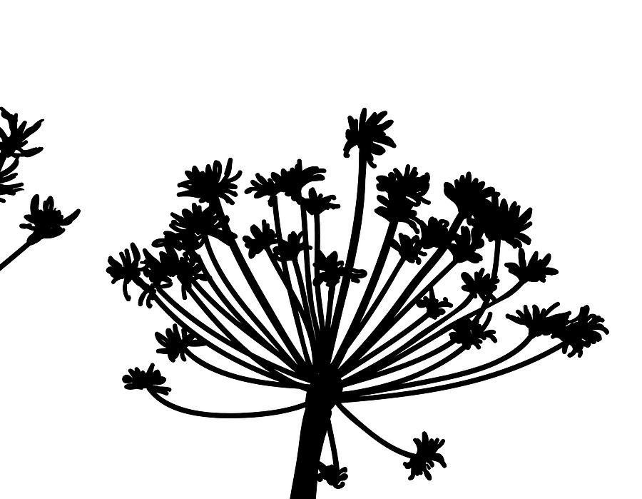 Black And White Dandelion Part 2 Digital Art