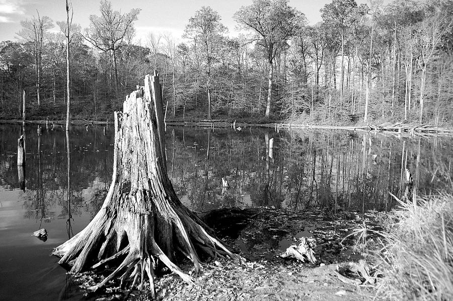 Black And White Fall Alum Creek Photograph  - Black And White Fall Alum Creek Fine Art Print