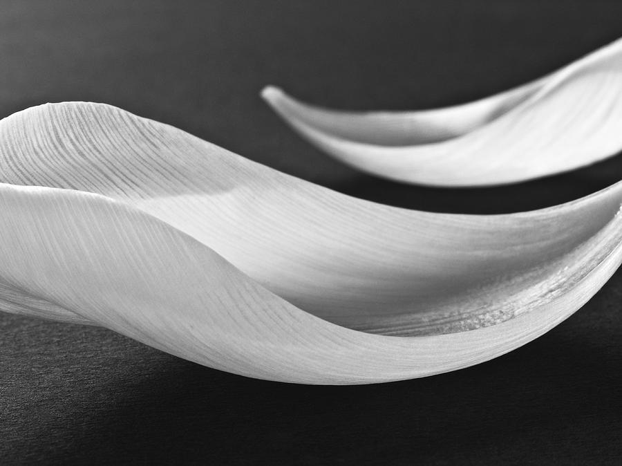 Flower Art Black And White Fine Art Black And White
