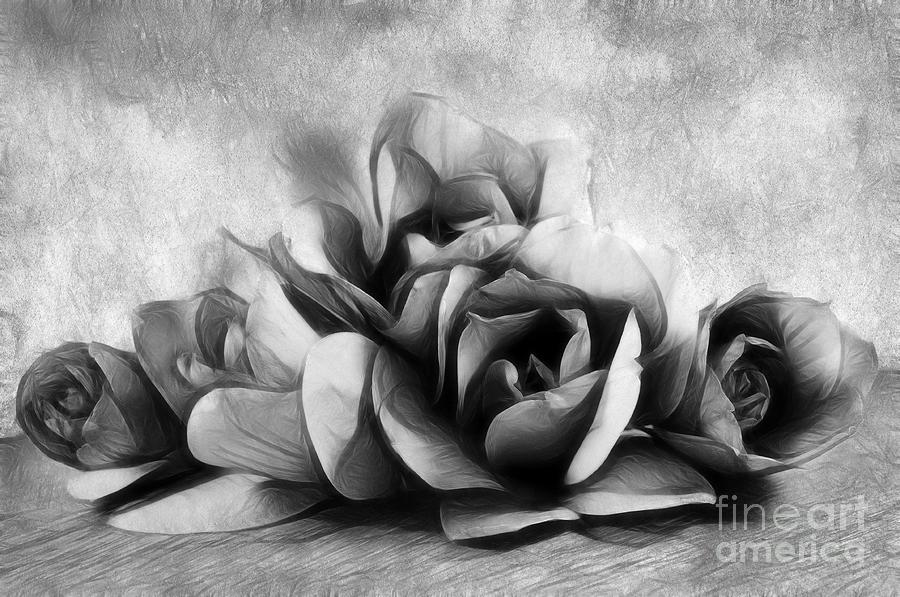 Black And White Is Beautiful Photograph  - Black And White Is Beautiful Fine Art Print