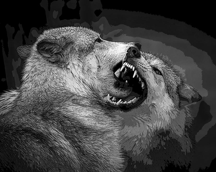 Free Download White Wolf And Black Fighting Jpeg HD WallpaperWhite Wolf And Black Wolf Fighting