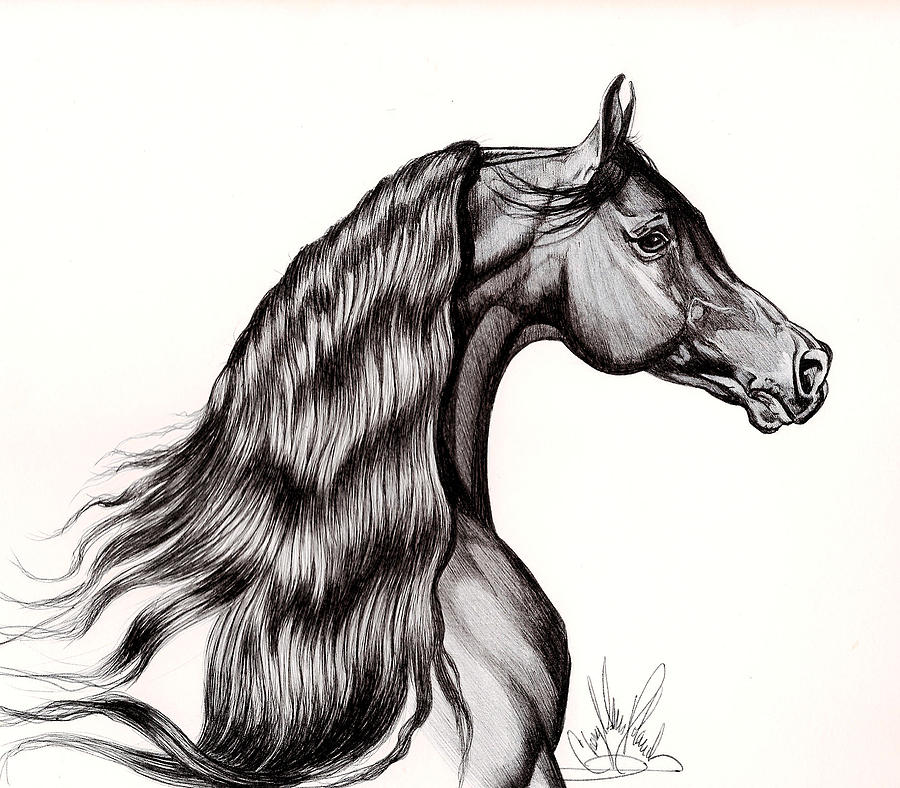 Black Arabian Head View From Right Drawing by Cheryl Poland