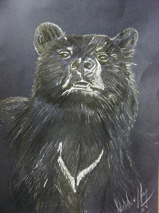 Black Bear Drawing  - Black Bear Fine Art Print