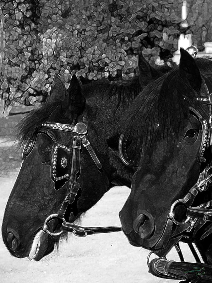 Black Beauties Photograph