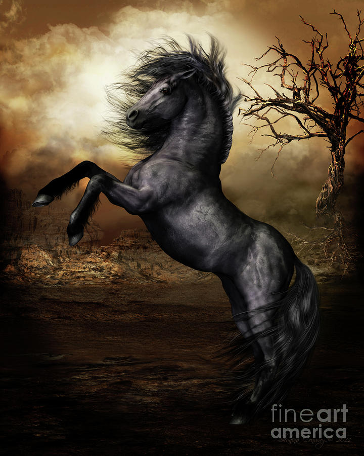 Black Beauty Digital Art