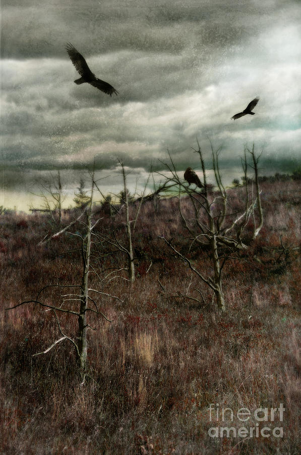Black Birds In Spiky Trees Photograph  - Black Birds In Spiky Trees Fine Art Print