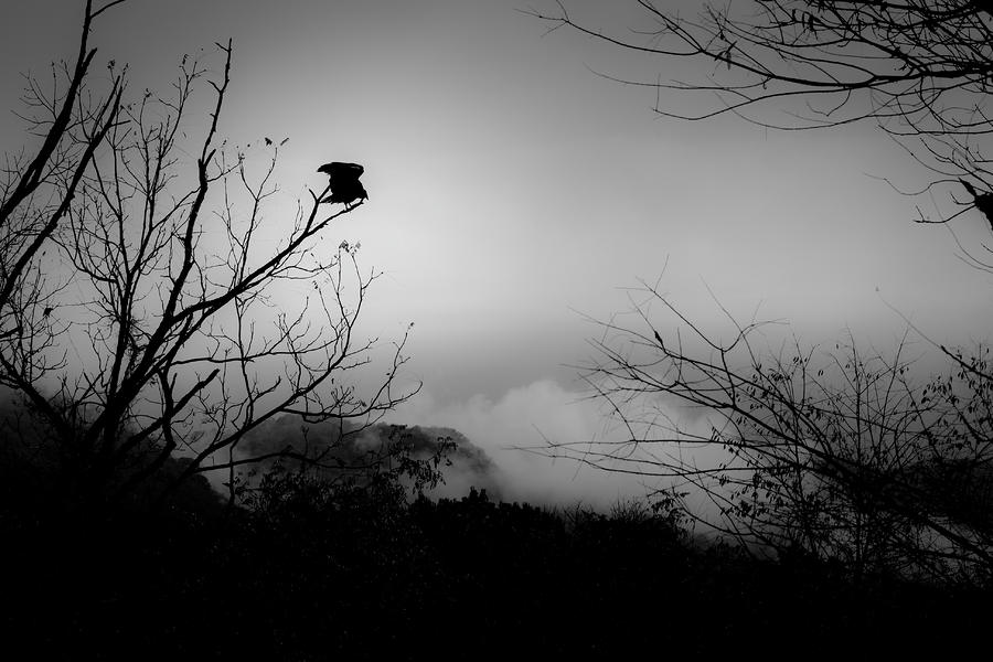 Black Buzzard 8 Photograph  - Black Buzzard 8 Fine Art Print