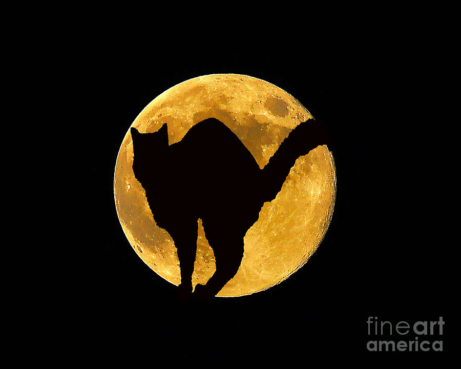 Black Cat Moon Photograph  - Black Cat Moon Fine Art Print