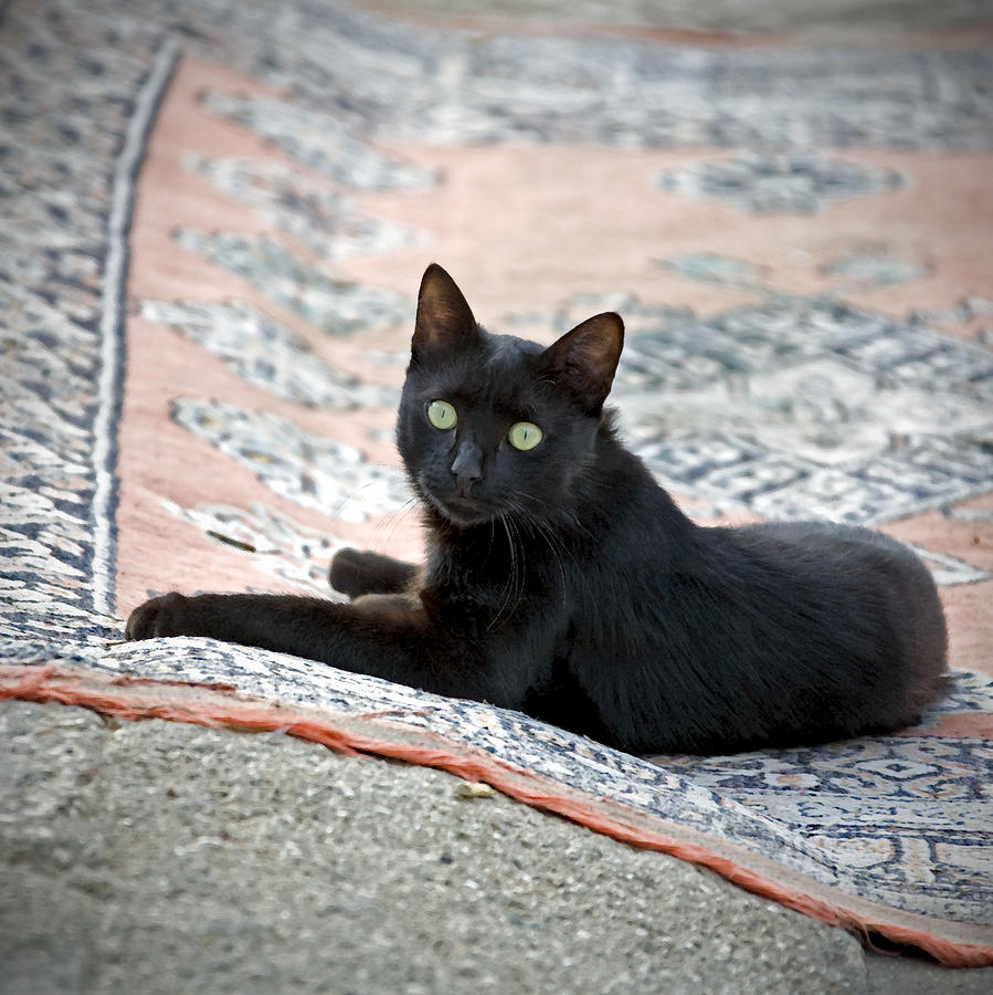 Black Cat On A Persian Rug Photograph By Glennis Siverson