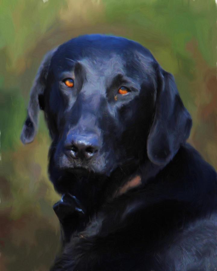 black lab portrait by jai johnson