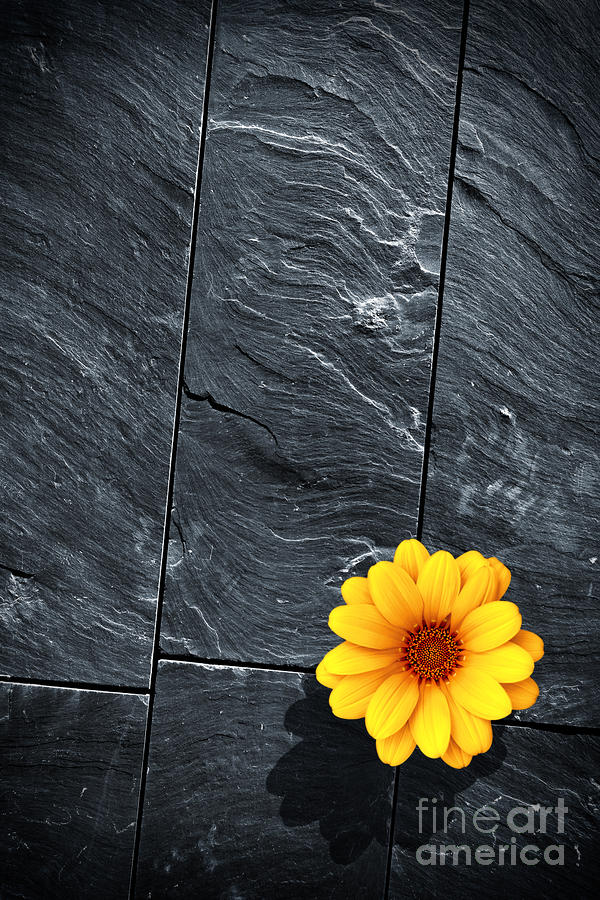 Black Schist Flower Photograph  - Black Schist Flower Fine Art Print