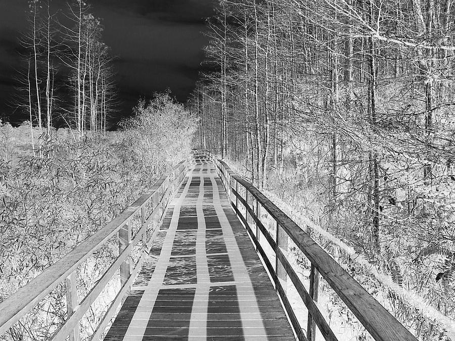 Black Sky White Shadows Photograph  - Black Sky White Shadows Fine Art Print