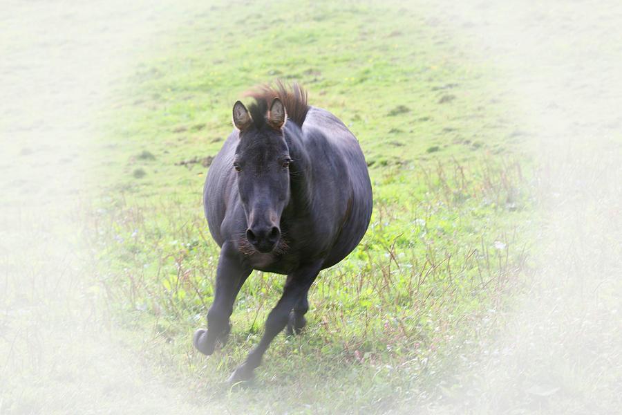 Black Zebra Photograph