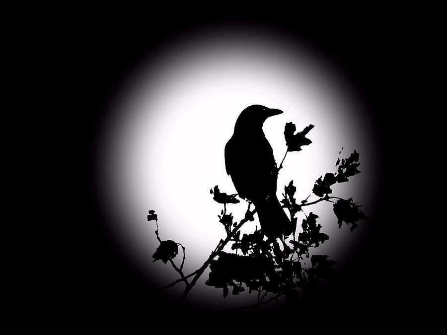Blackbird In Silhouette  Photograph