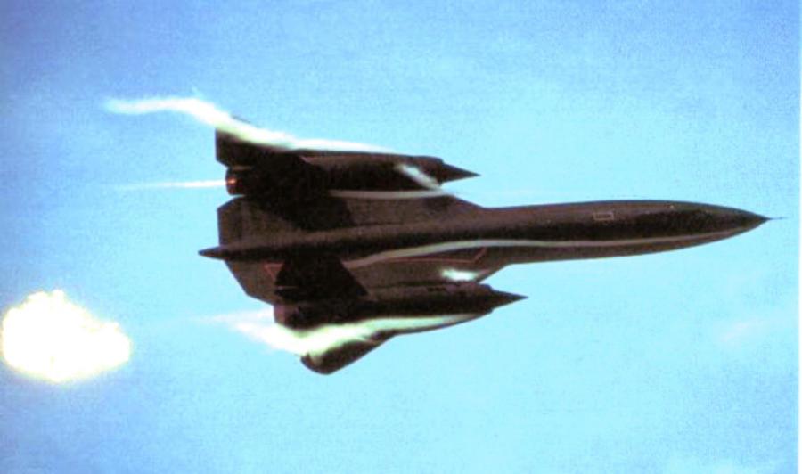 Blackbird Photograph