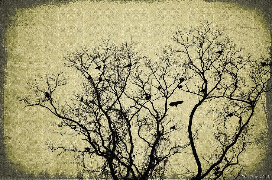 Blackbirds Roost Photograph