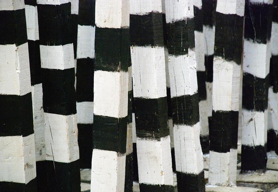 Blanco Y Negro Photograph