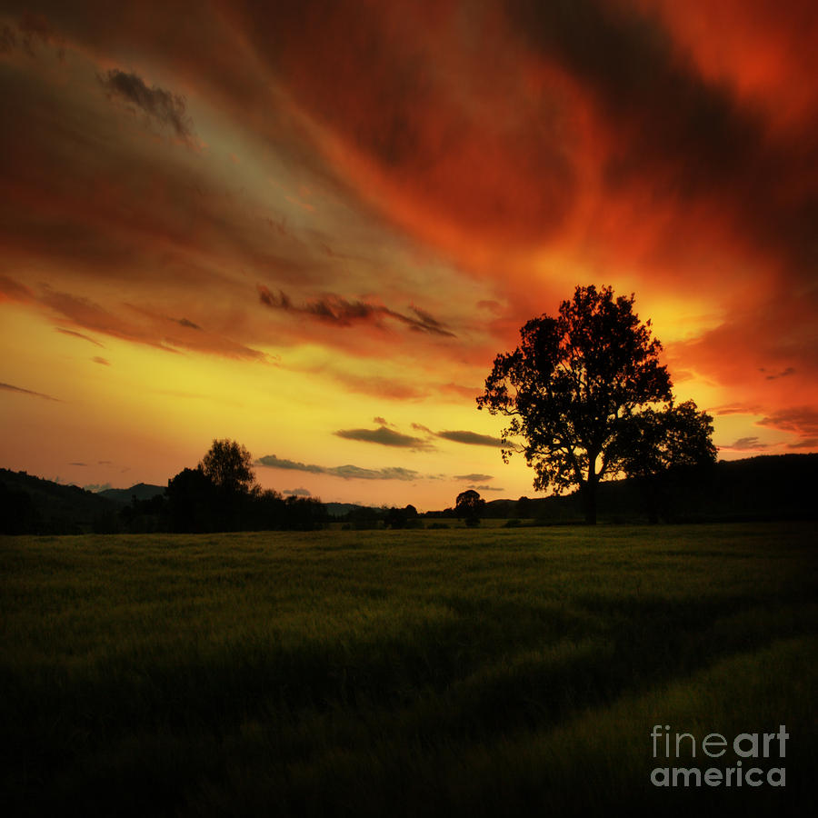 Blazing Skies Photograph  - Blazing Skies Fine Art Print