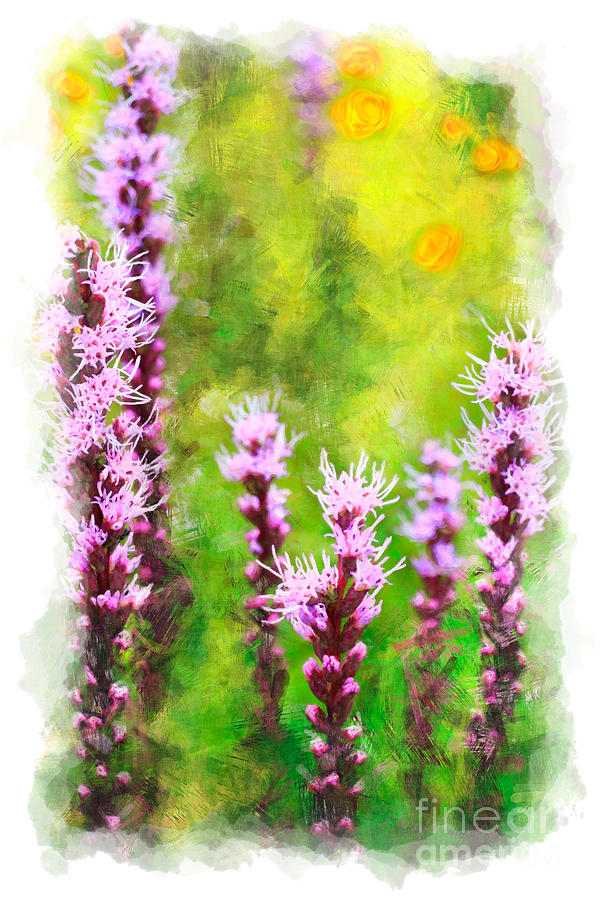 Blazing Star - Vignette Painting  - Blazing Star - Vignette Fine Art Print