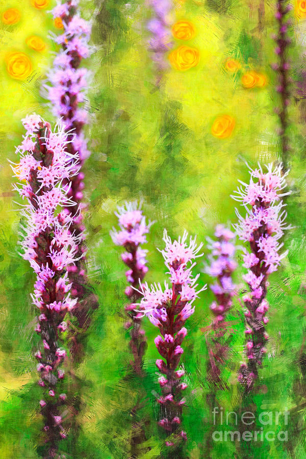 Blazing Star  Painting  - Blazing Star  Fine Art Print