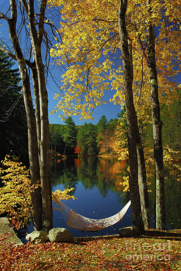 Bliss - New England Fall Landscape Hammock Photograph  - Bliss - New England Fall Landscape Hammock Fine Art Print