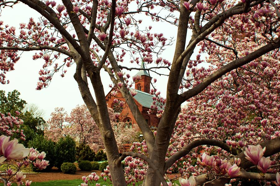 Blossoms At The Castle Photograph
