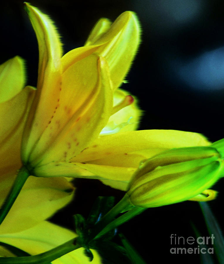 Yellow Photograph - Blowing Away by Shirley  Taylor