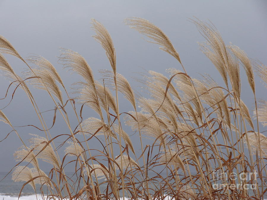 Blowing In The Wind Photograph