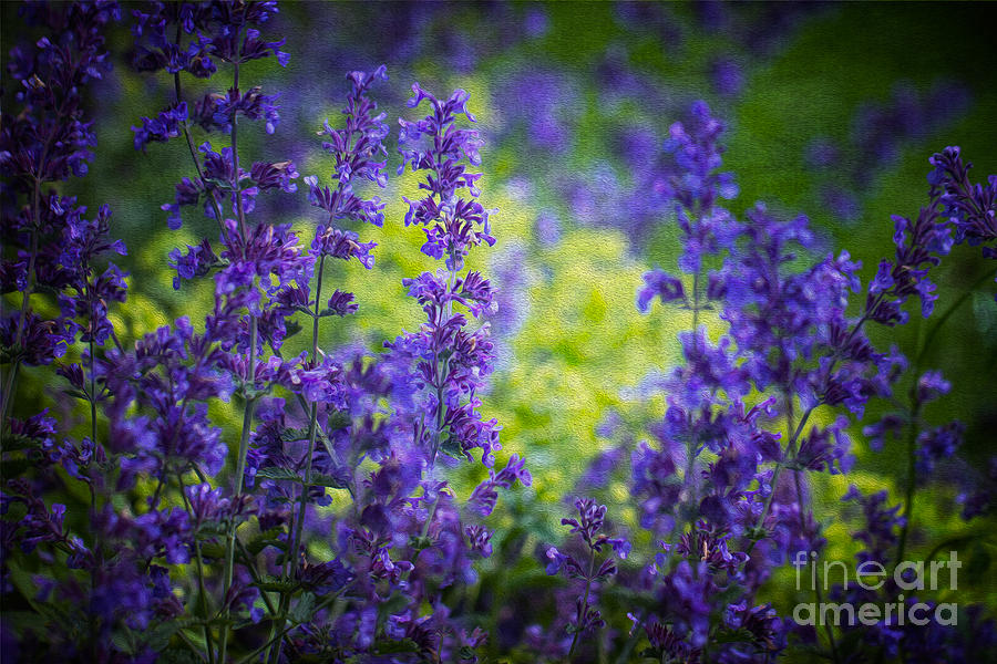 Blue And Gold. Photograph  - Blue And Gold. Fine Art Print