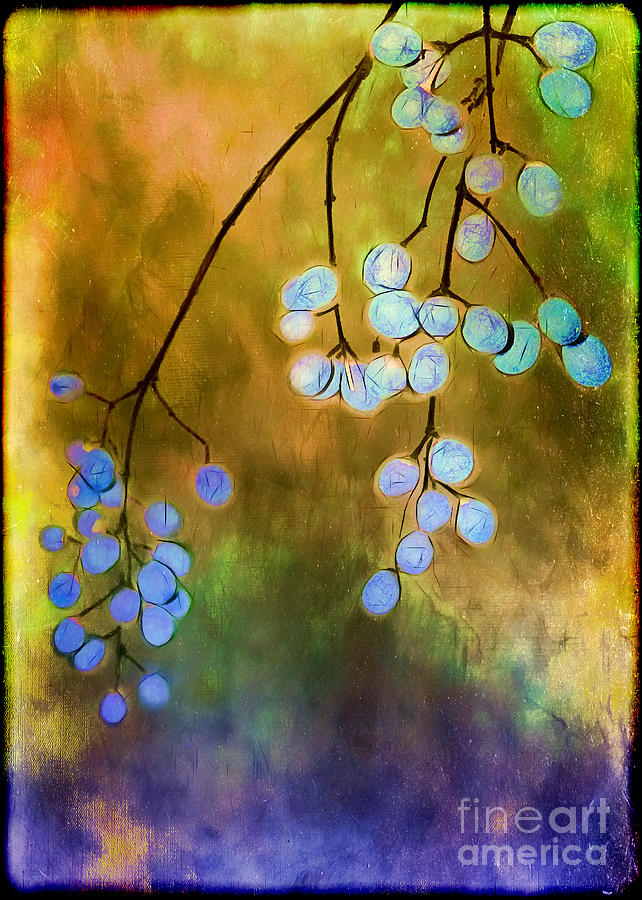 Blue Autumn Berries Photograph
