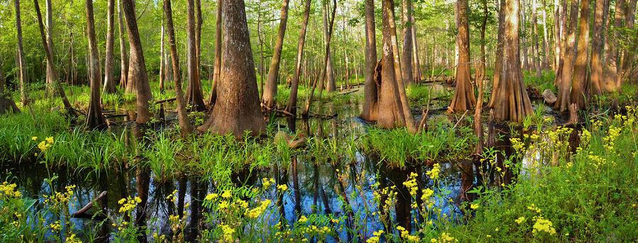 Blue Bayou Photograph
