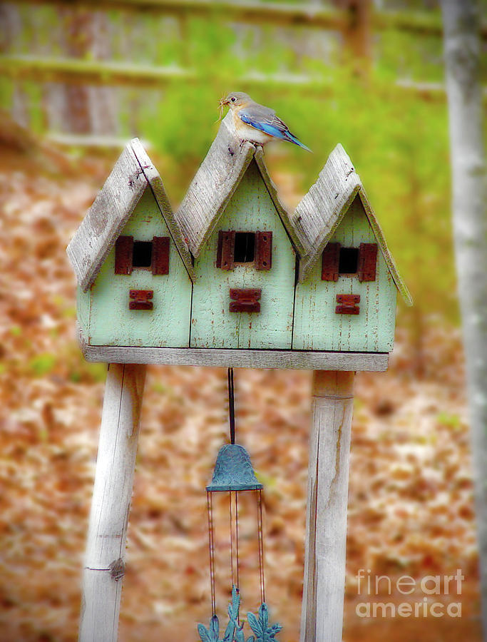 Blue Birds Castle Photograph