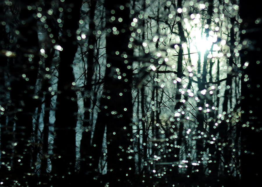 Swamp Photograph - Blue Burns The Twilight by Rebecca Sherman