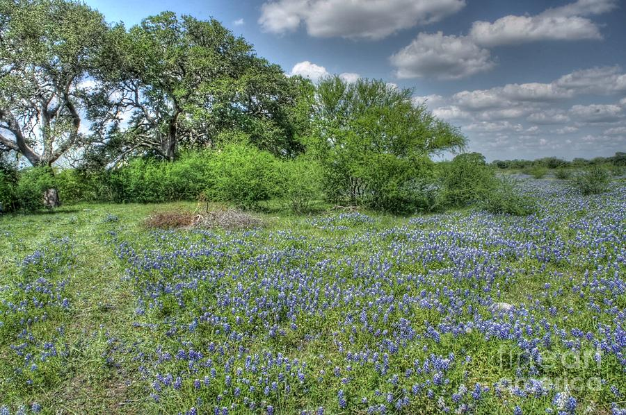 Blue Creek Photograph