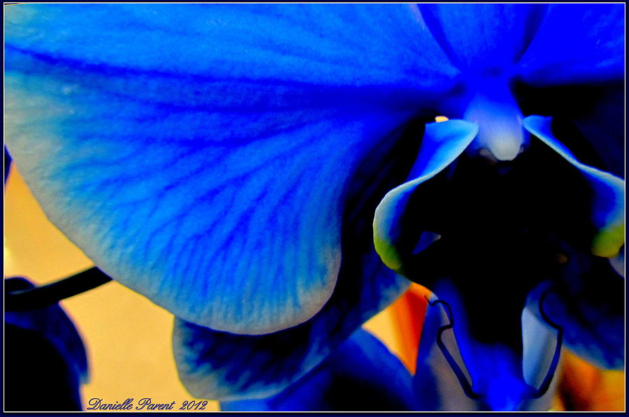 Blue Diamonds Orchids Photograph