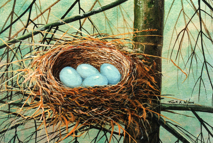 Blue Eggs In Nest Painting  - Blue Eggs In Nest Fine Art Print