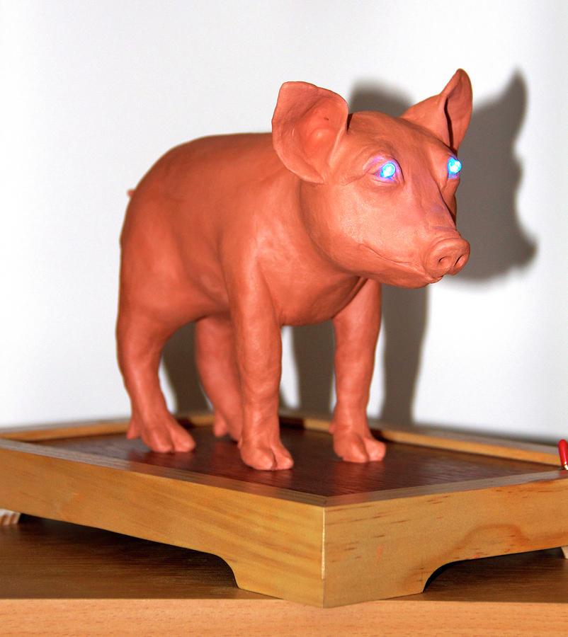 Blue Eye Pigture Sculpture