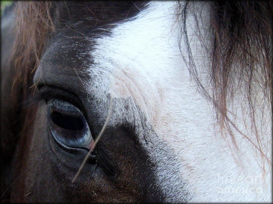 Blue Eye Photograph - Blue Eyed Girl by Kim Yarbrough