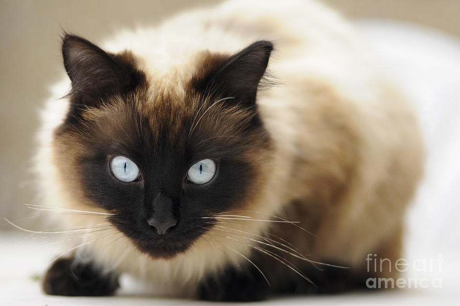 Blue Eyes Photograph  - Blue Eyes Fine Art Print