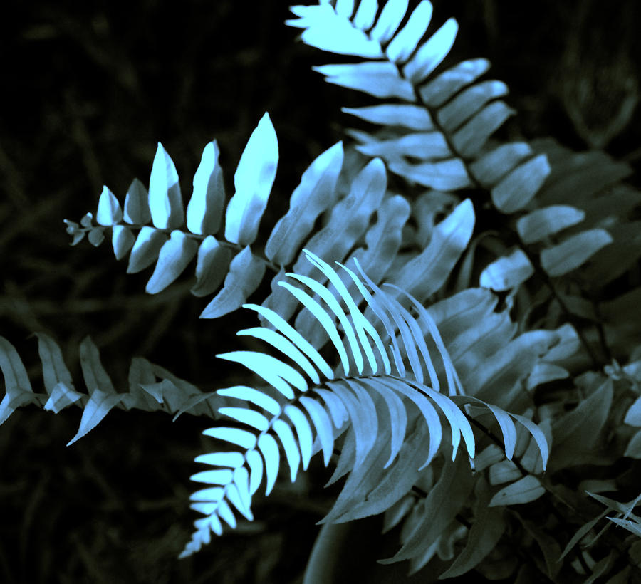 Blue Fern Photograph