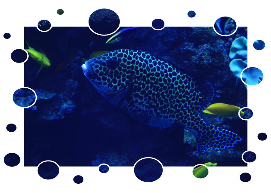 Blue Fish Photograph  - Blue Fish Fine Art Print