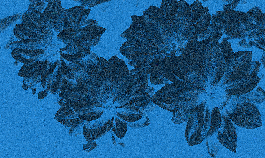 Flower Photograph - Blue Flower Art by Aimee L Maher Photography and Art Visit ALMGallerydotcom
