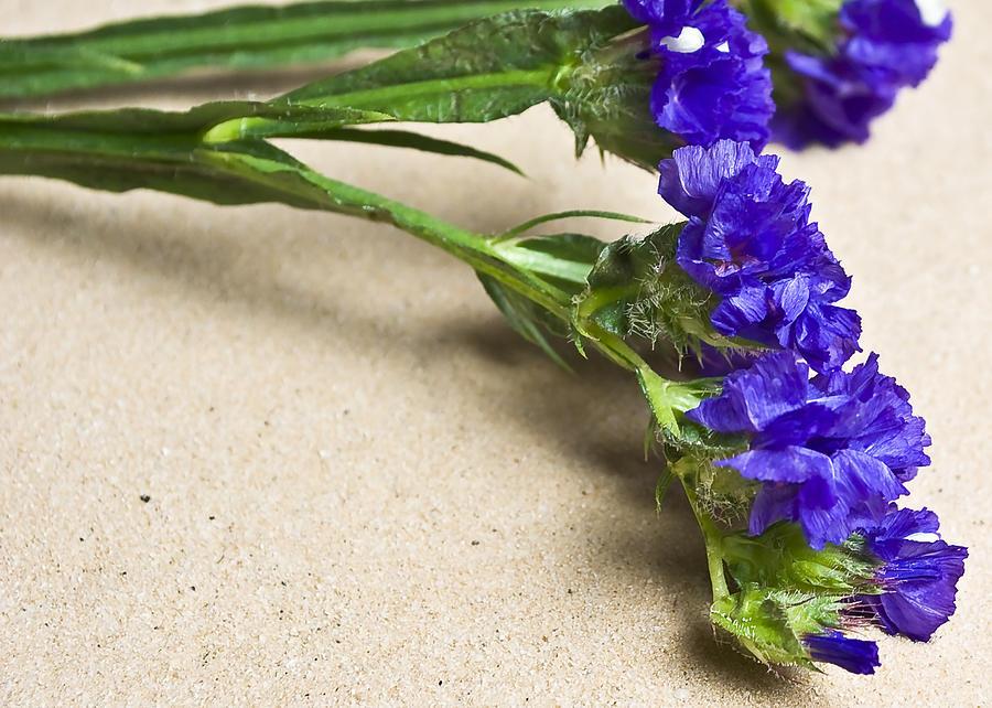 Blue Flower Photograph