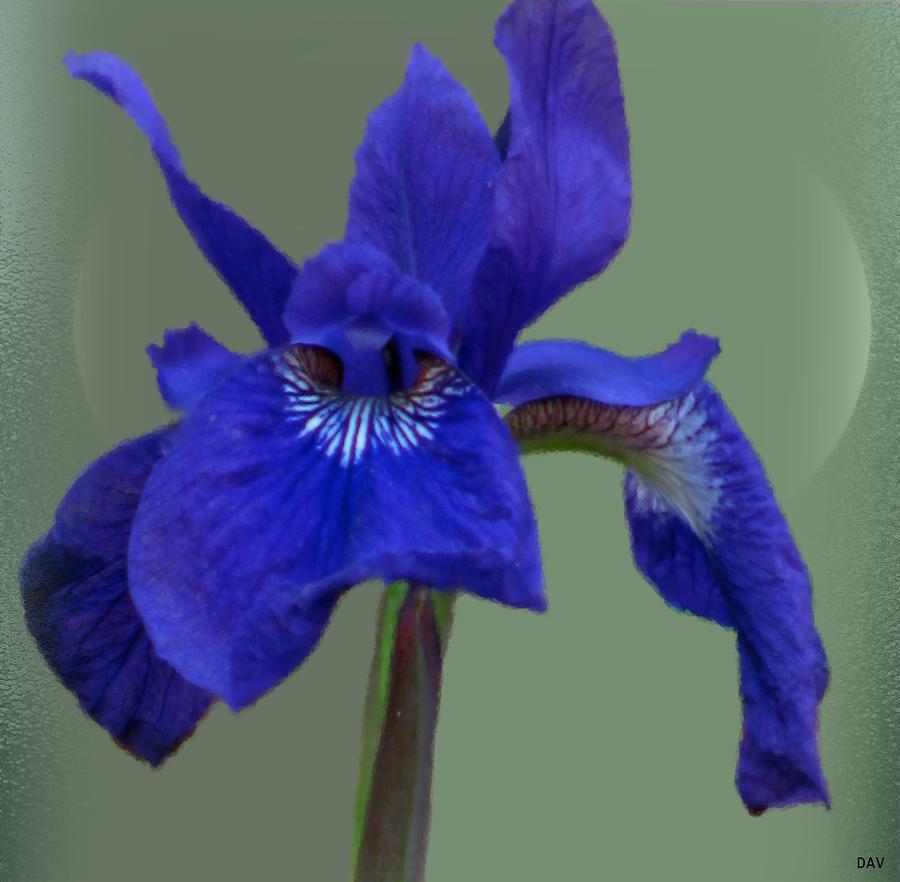 blue iris ring by debra vatalaro. Black Bedroom Furniture Sets. Home Design Ideas