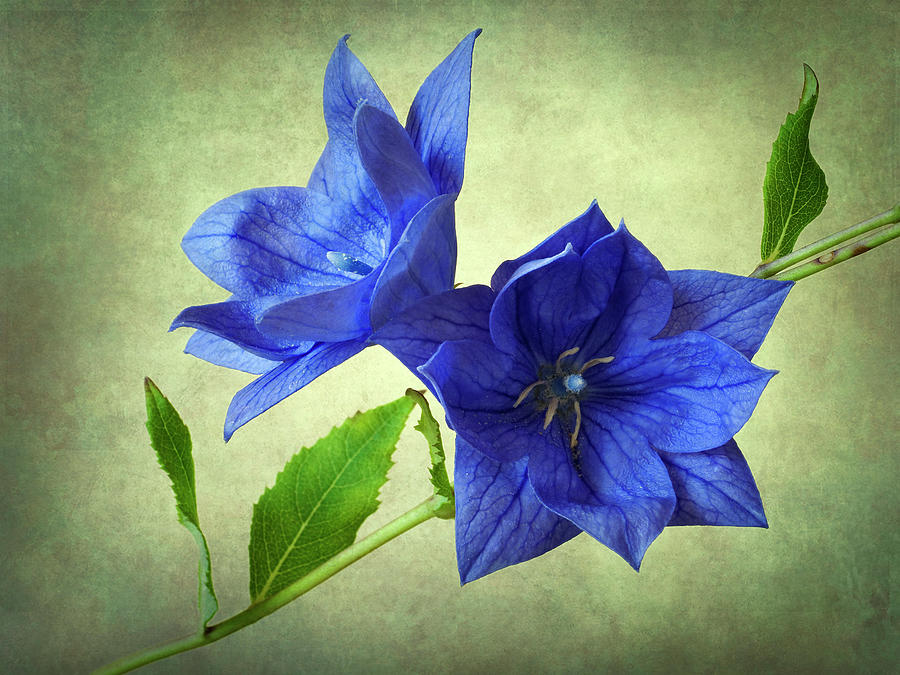 Blue Photograph  - Blue Fine Art Print