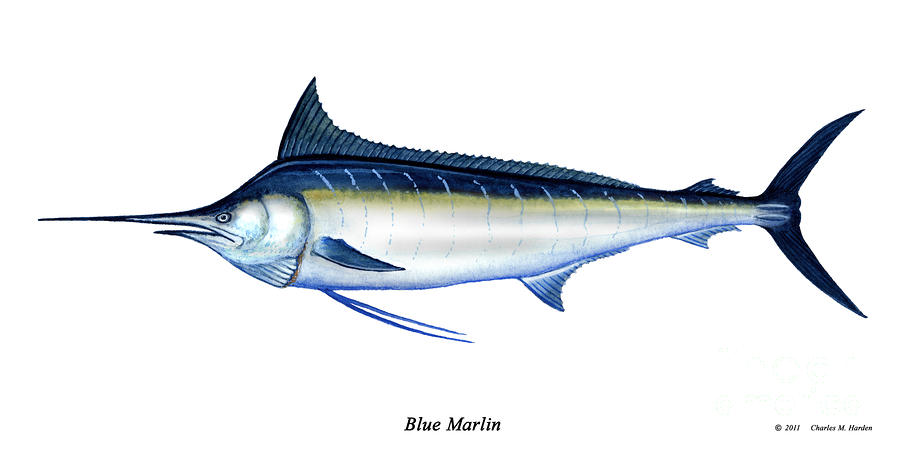 Blue Marlin Painting  - Blue Marlin Fine Art Print