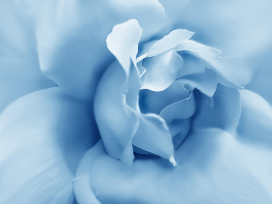 Blue Pastel Rose Flower Photograph